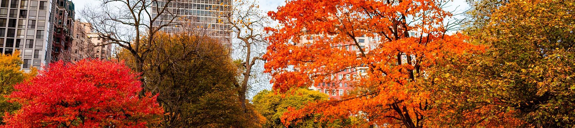 Chicago Autumn
