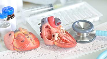 Heart and Vascular Center